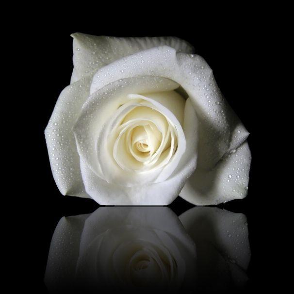Rose blanche espace perso de beatrice - Bouquet de roses signification ...